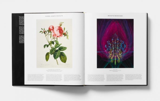 Plant exploring the botanical world zabriskie following in the footsteps of the international bestseller map exploring the world this fresh and visually stunning survey celebrates the extraordinary gumiabroncs Images